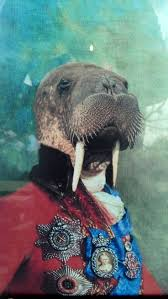 24 best walrus images on pinterest animals sea lions and knit