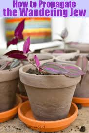 25 Easy Houseplants Easy To by Houseplant That U0027s Easy To Grow And Propagate And It U0027s Non Toxic
