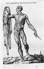 the history of muscles