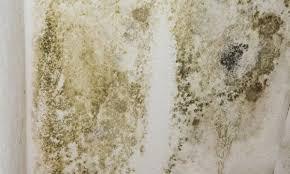 moisissure mur chambre 3 é pour se débarrasser des moisissures avant de peindre