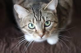My Cat Peed On My Bed Cat Problems Cat Behavior Problems
