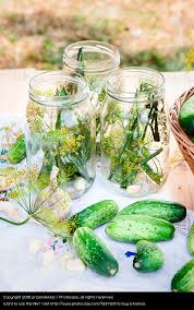 pickling cucumbers with home garden vegetables and herbs a