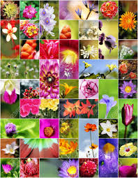 collage of flowers in different shapes colors and designs stock