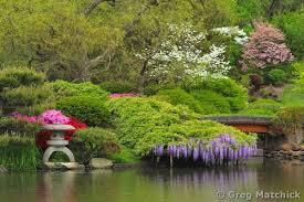 photographs of missouri botanical gardens chinese garden
