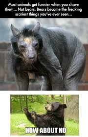 Bear Stuff Meme - shaved bear www meme lol com other that i love pinterest