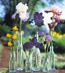 Vase With Irises How To Grow Maintain And Divide Bearded Iris