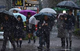November Tokyo by Snow Falls In Central Tokyo For The First Time In November In 54 Years