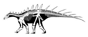 image dacentrurus armatus skeleton png dinosaur king fandom