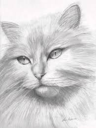 aceo new artwork pencil drawing animal dogs puppy by sue flask