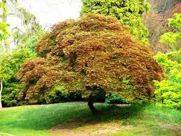 albero giardino alberi e arbusti