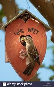 nesting sparrows love nest love romance romantic nature backyard