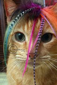 feather extensions cat feather pet accessories for cat toys or dog extensions