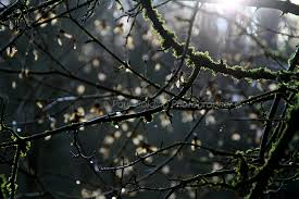 Lit Branches Paul Golding A Life Time Taking Photos