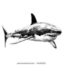 sketch shark stock images royalty free images u0026 vectors
