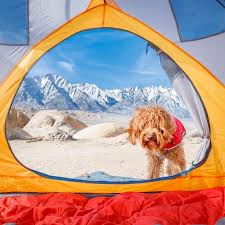 10 adventure loving dogs u0026 their owners to follow on instagram