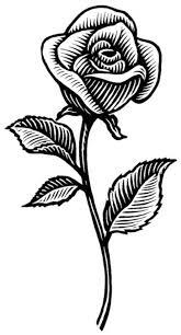 imagenes para colorear rosas imágenes de rosas para dibujar descargar imágenes gratis