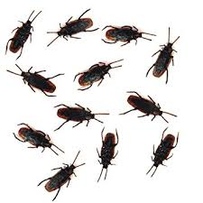 Baby Roaches In Bathroom Amazon Com 12 Fake Roaches Prank Cockroach Bugs Look Real