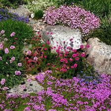30 best shade u0026 rock gardens images on pinterest plants