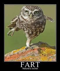 Funny Owl Meme - vh funny owl fart demotivational poster