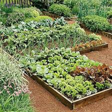 best 25 vegetables garden ideas on pinterest vegetable