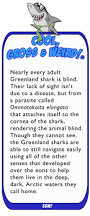 What Is Blind Sight What Is Eating The Eyes Of Greenland Sharks Cool Gross U0026 Weird