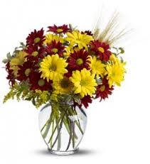 elkton florist elkton florist elkton md flower shop fair hill florist