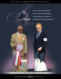 belgian sheepdog national specialty herding all breed u2013 dn dog news magazine top ten list