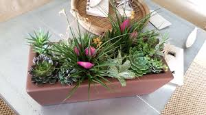 indoor plant arrangements the trendsetting air plant offers flexibility in design and