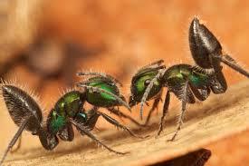 global ants database
