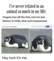 Penguin Memes - i ve never related to an animal so much in my life penguin eats all