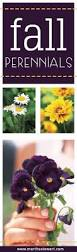 9 best fall flowers images on pinterest fall flowers farms and