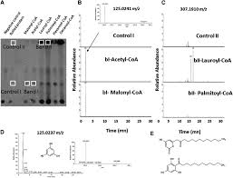 structure function analysis of a type iii polyketide synthase in