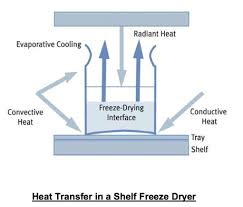 design freeze meaning freeze drying lyophilization information basic principles