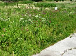 wisconsin native plants fall is the time to start planting a native prairie plot wiscontext
