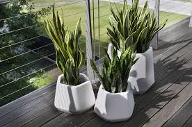 vasi da interno vaso da interno e giardino ops s nicoli