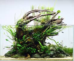 50 aquascape aquarium design ideas meowlogy