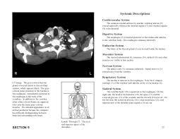 Neck Cross Sectional Anatomy Miniatlas Of Human Cross Sectional Anatomy