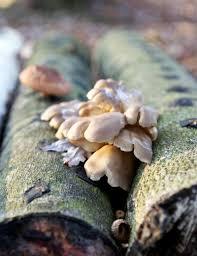 4 ways to grow mushrooms hobby farms