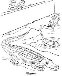 zoo reptile coloring alligators exhibit coloring zoo