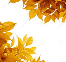 autumn leaves white background leaf border yellow