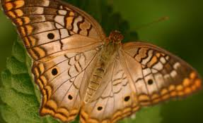 butterfly photography butterfly photograph beautiful close