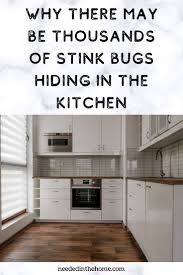how to clean cupboards after pest why there may be thousands of stink bugs hiding in the