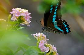 beautiful butterflies from around the