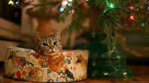 cat christmas 1600x900 christmas present cat wallpaper
