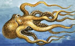 redeeming the octopus the most remarkable creature of our nightmares