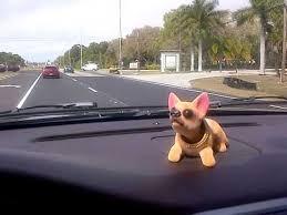 chihuahua bobble dash rider