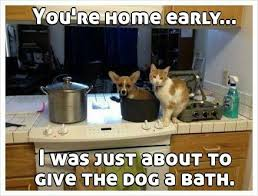 Dog Cooking Meme - funny image 3348207 by winterkiss on favim com