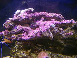 Live Rock Aquascaping Ecoliverock Org Cheapest Live Rock In Canada