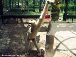 Funny Monkey Meme - stretching for my workout funny monkey pictures