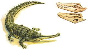 what is the difference between alligators and crocodiles